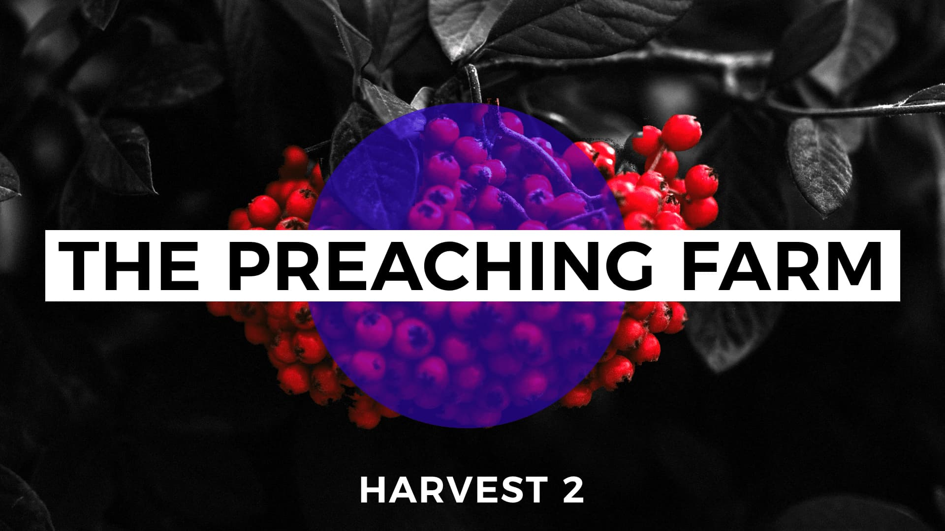 The Preaching Farm: Harvest 2 cover