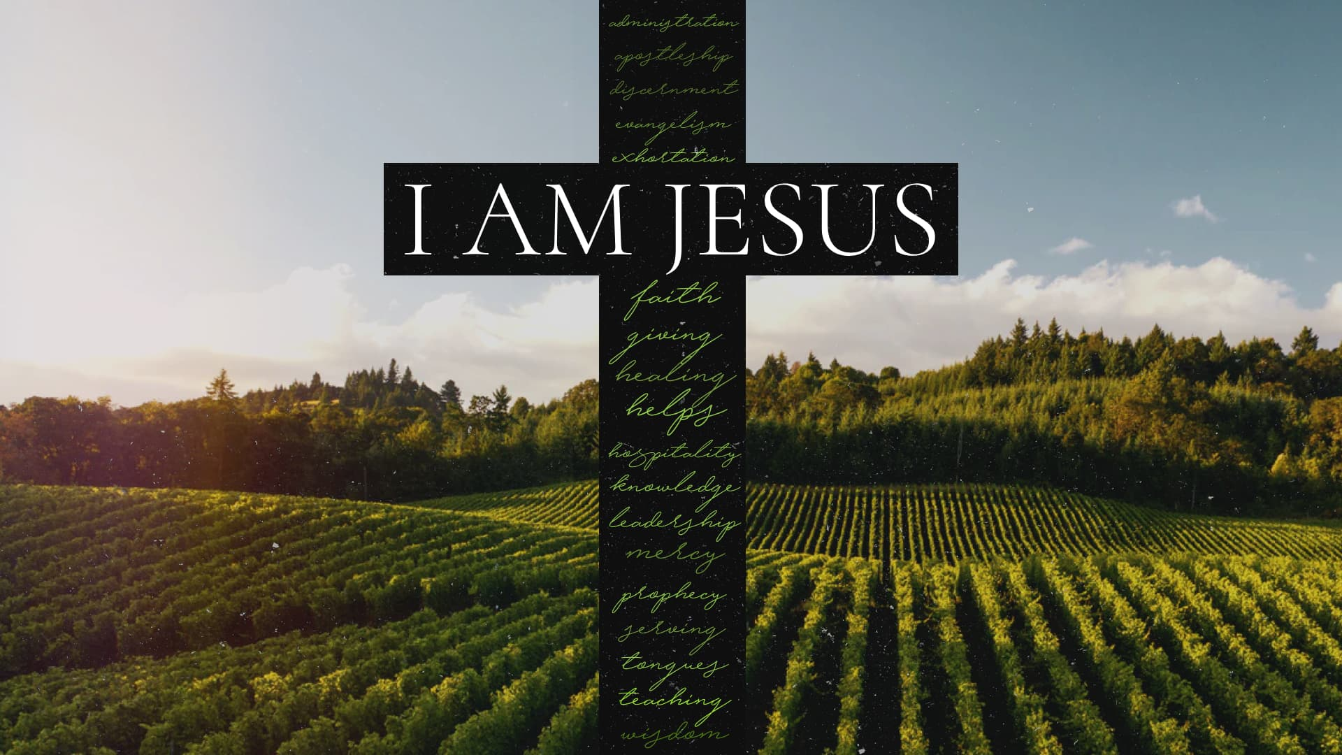 I Am Jesus: I Am the True Vine